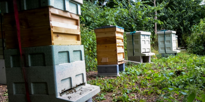 Surbiton beekeeper seeks more space for hives as honey sales rise