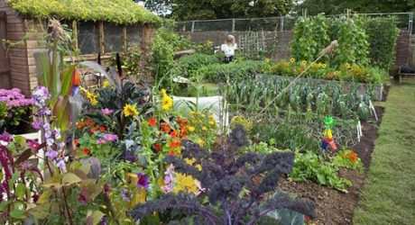 Heritage Lottery Fund cash gives green light on allotment project