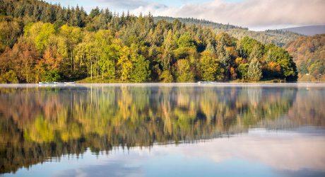 Kingston winter tree planting scheme planning complete